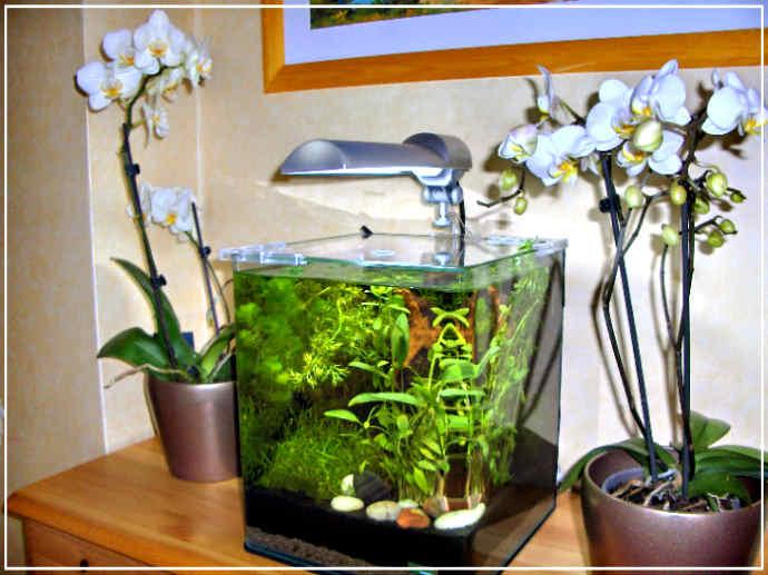 Nano aquarium d'eau douce